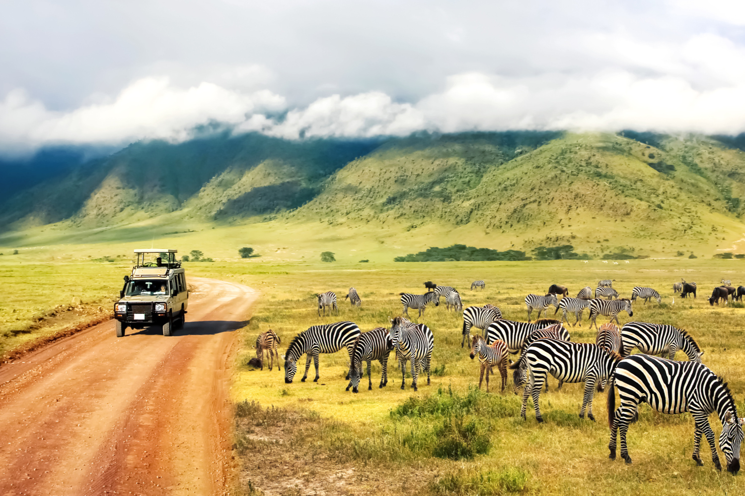 Zebras against mountains and clouds
