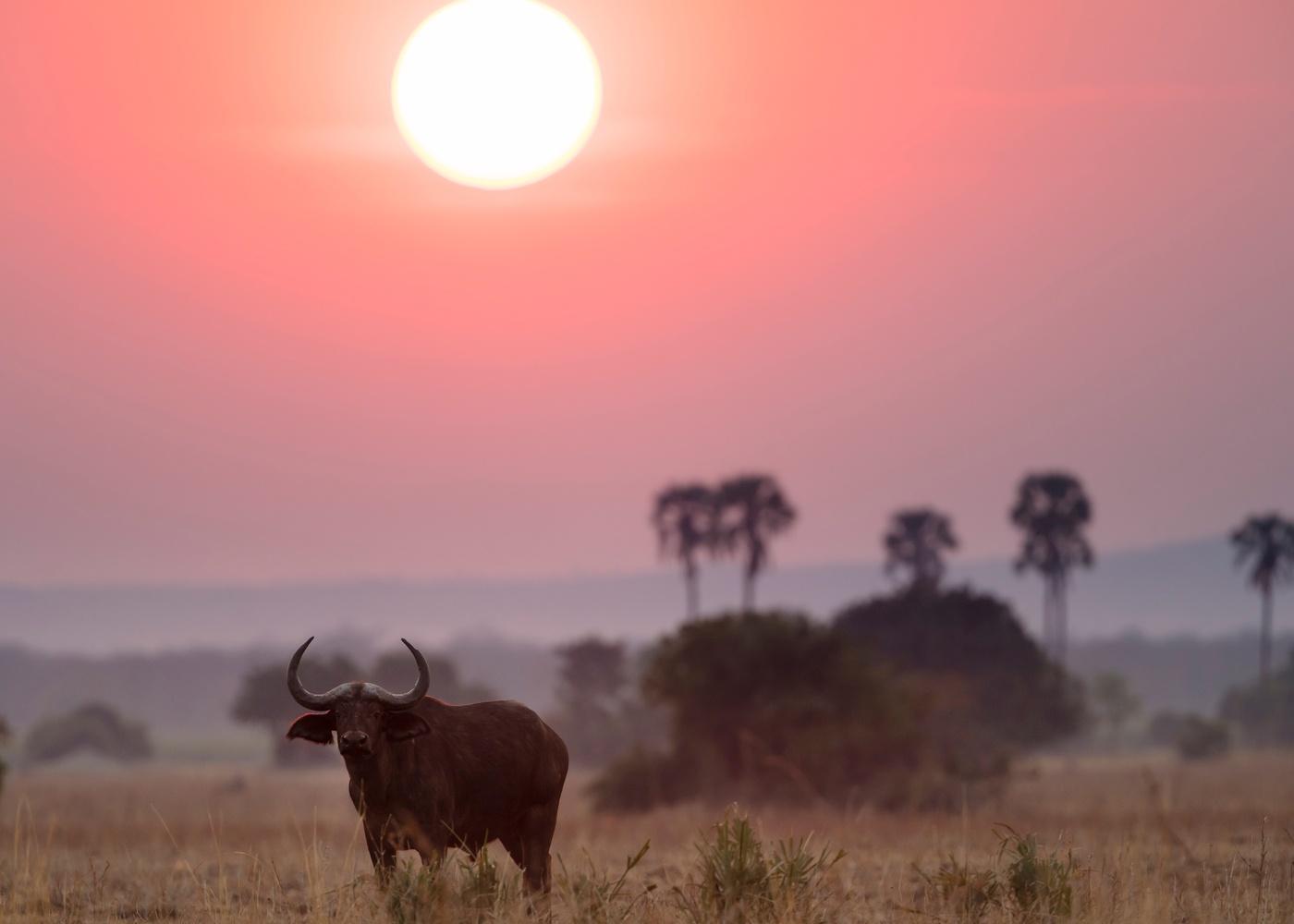 rising sun over buffalo